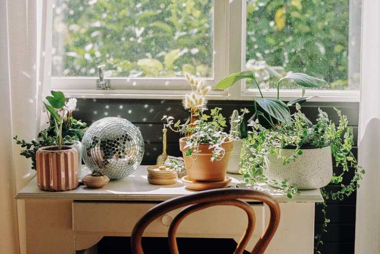 Houseplants Group Together on a Desk Near a Window