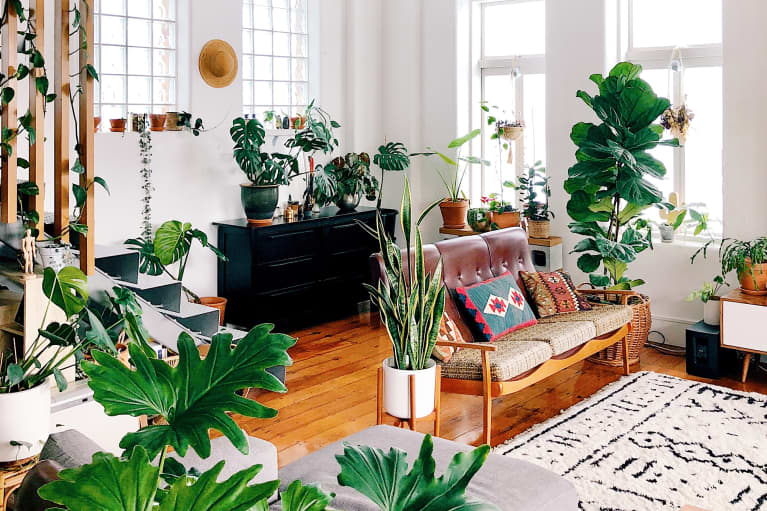 Just Another Reason To Get That Houseplant: It Can Provide A Sense Of Control