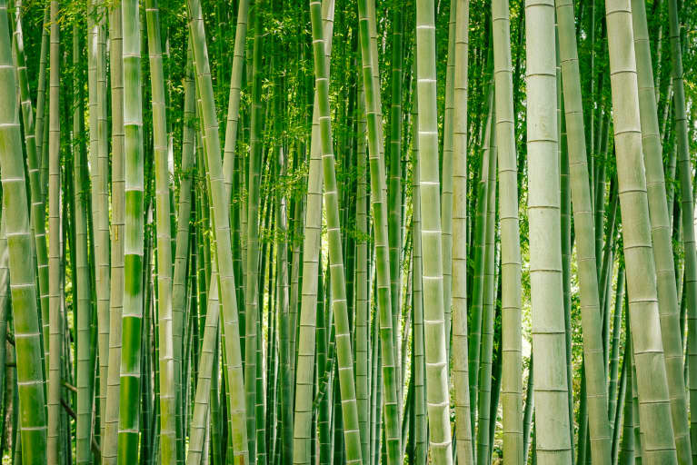 Bamboo Is Everywhere These Days — But How Sustainable Is It?