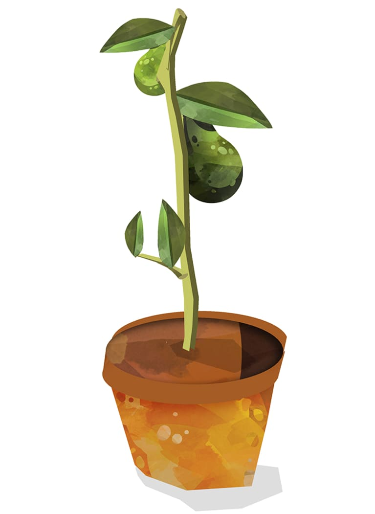 illustration of avocado tree growing in pot