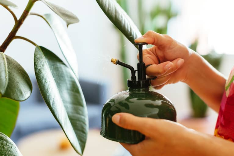 Woman Misting Houseplant