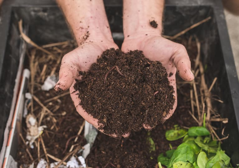 Vermicompost Almost Guarantees A Thriving Garden: Here's How To Get It