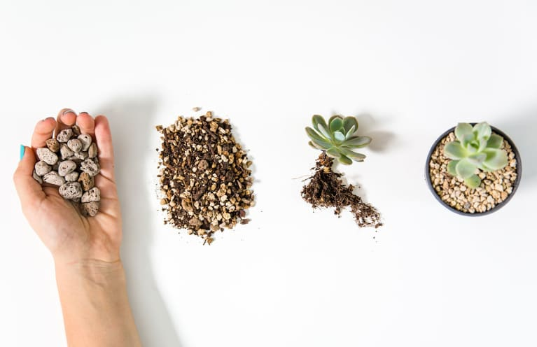 This Is A Popular Alternative To Soil — But Does It Actually Keep Plants Alive?