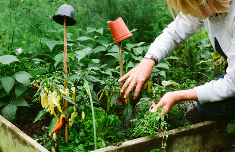 The Underrated Plant Your Sunny Vegetable Garden Is Missing
