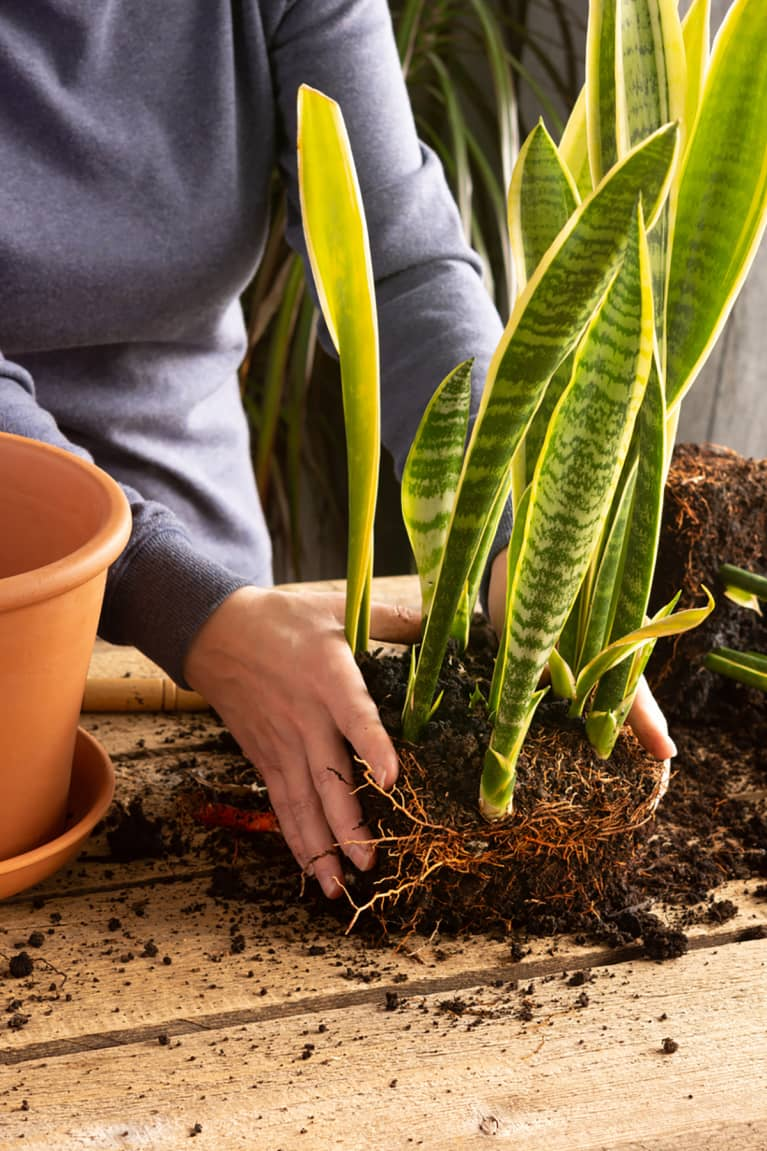 Natural plant fertilizer to kick off spring growth