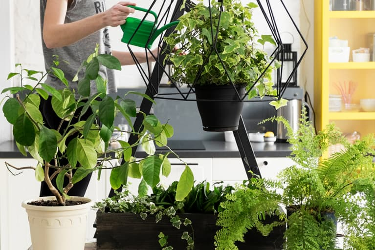 5 Things That'll Make Your Houseplant Very Happy This Spring