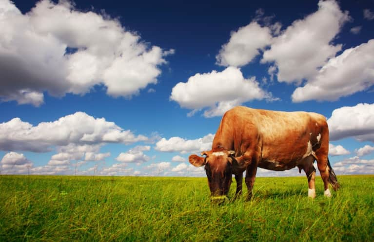 5 Reasons Why You Should Be Mindful Of Factory-Farmed Meat