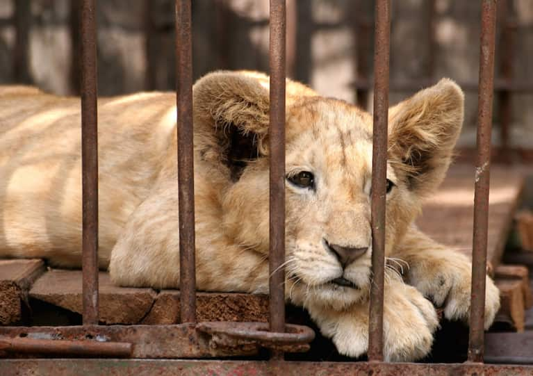 San Francisco Wants To Ban Wild Animal Performances