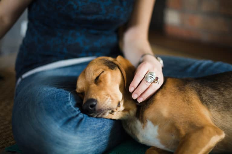 10 Steps To Protect Your Pets (And Your Home!) From Toxins