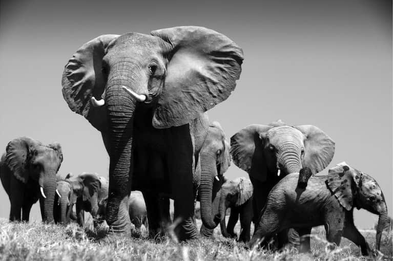What I Wish More People Knew About Elephants