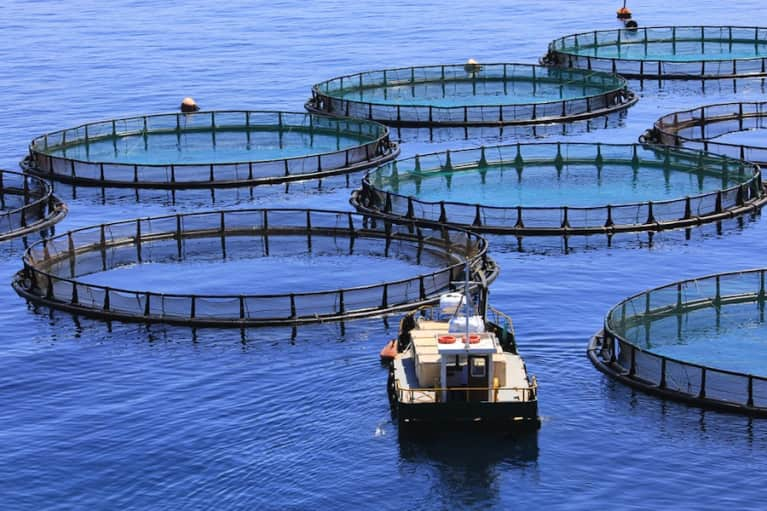 7 Things Everyone Should Know About Farmed Fish