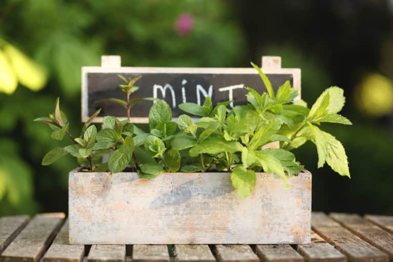 Soothe Your Skin With This DIY Garden Mint Astringent