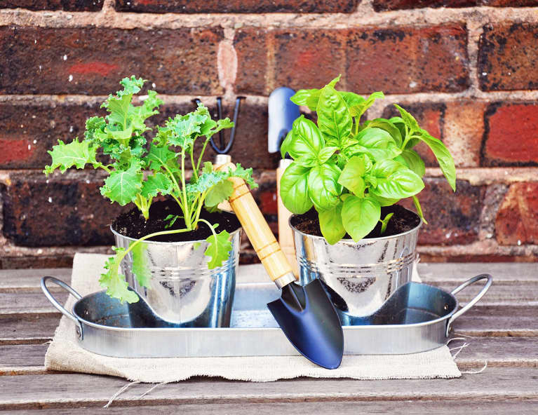 How To Make A Container Garden + 6 Easy-To-Grow Plants To Include