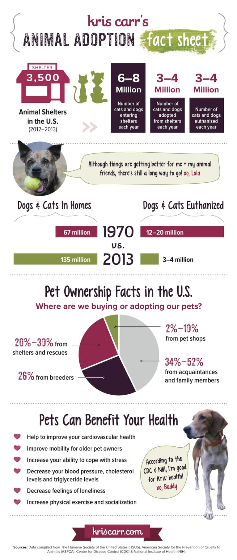 What Everyone Should Know About Animal Adoption (Infographic)