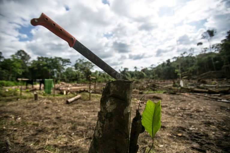 The Best Way To Stop Amazon Rain Forest Destruction