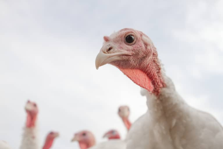 Here's Why Organic Turkeys Are So Darn Expensive