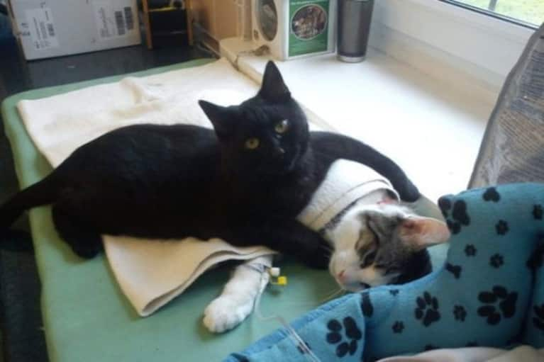 This Cute Cat Is A Nurse At A Polish Animal Shelter (Yes, Seriously)