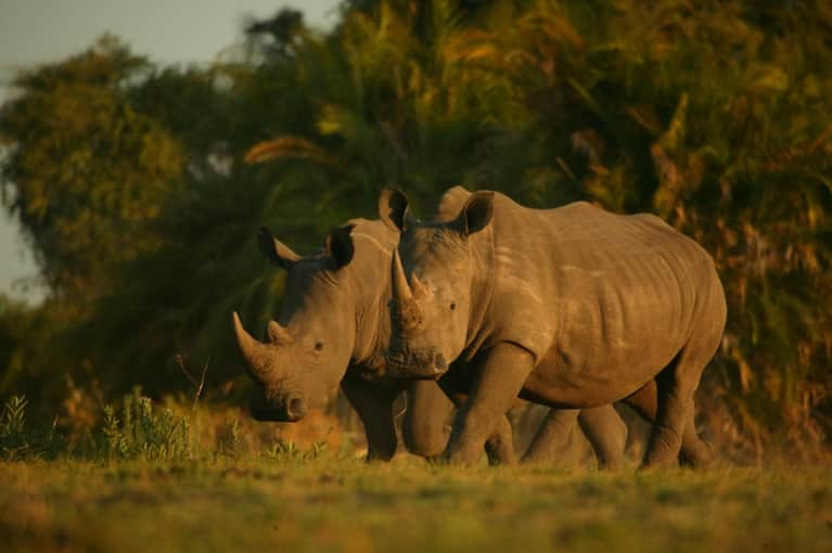 What I Wish Everyone Knew About Rhinos