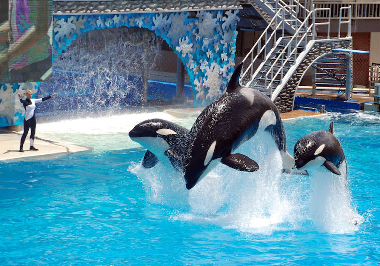 SeaWorld Promises To Make Killer Whale Tanks Bigger