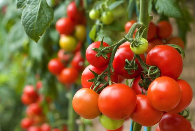 Gluten-Free Recipe: Creamy Tomato Rice