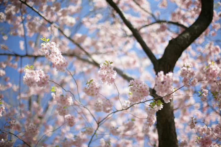 6 Rituals To Welcome The Vernal Equinox
