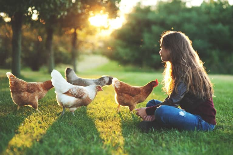 What Every Poultry Eater Needs To Know About Buying & Eating Chicken