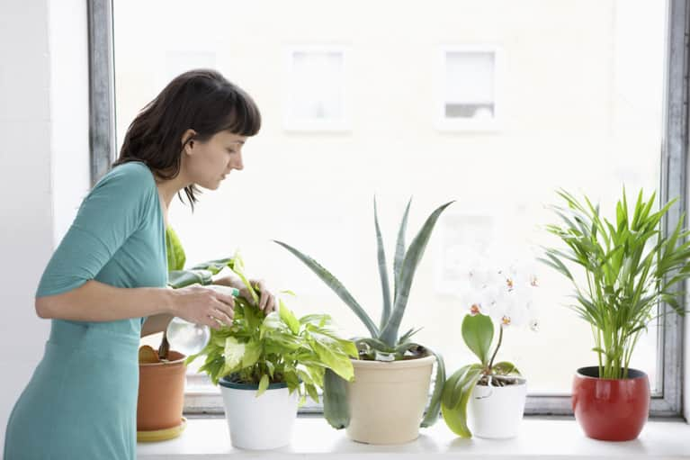 3 Reasons You Should Have More Plants In Your Home