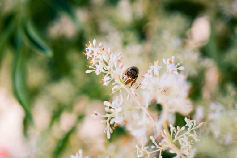 Save The Bees! New Study Finds Probiotics Can Help More Than Just Humans