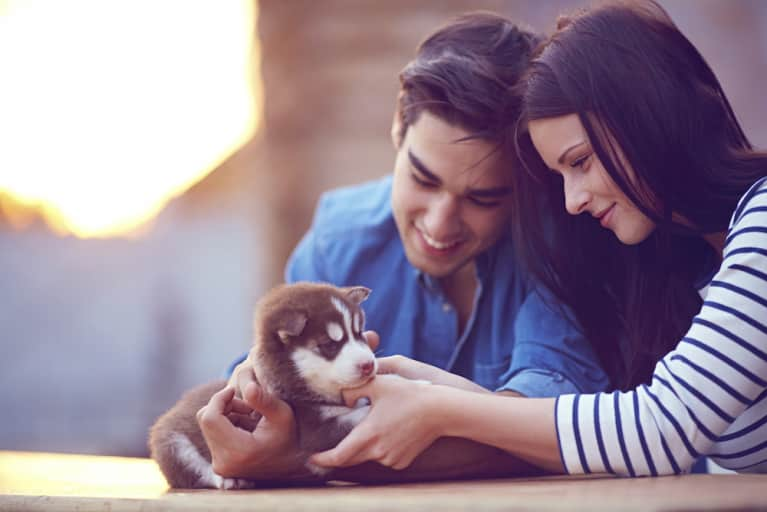 5 Ways Having A Pet Can Make You Better At Life