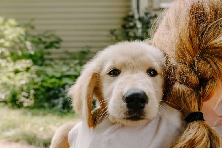 Kids Who Have Dogs Are 74% More Likely To Have This Social Skill