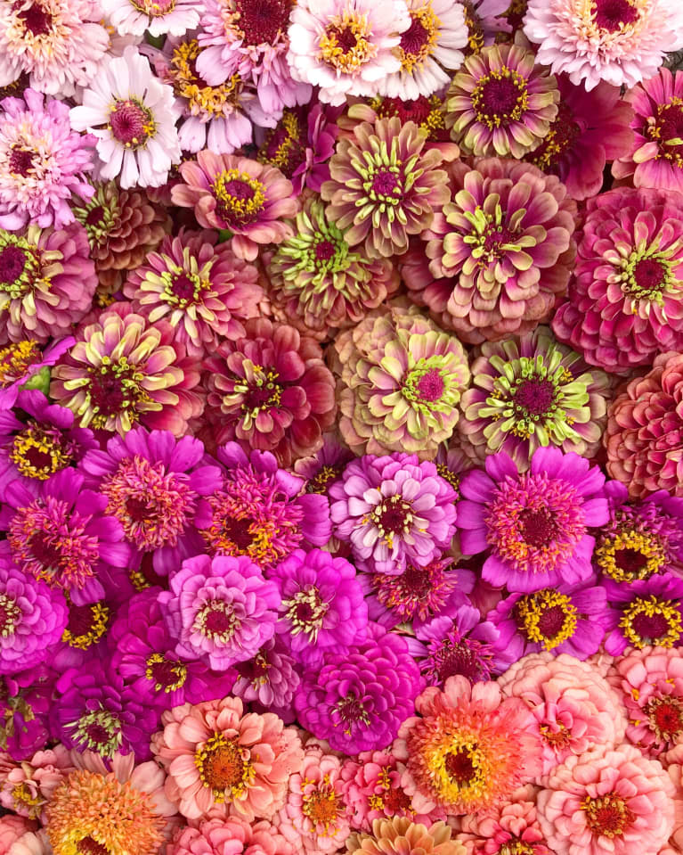 colorful field of purple and pink flowers in bloom