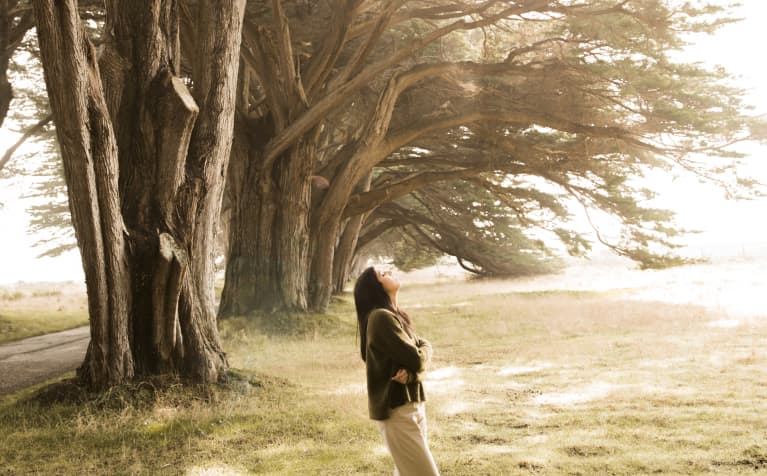 Woman On Meadow Of Cypress Trees Alley In Sunlight
