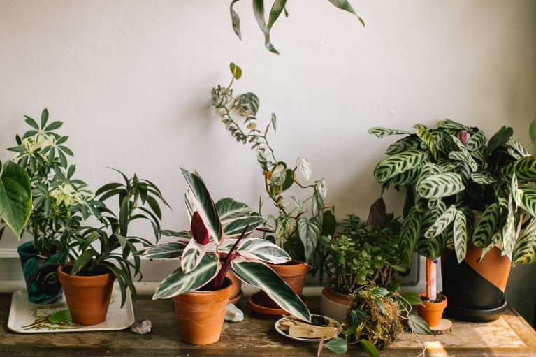 The One Room You're Not Putting Plants In — But Should Be