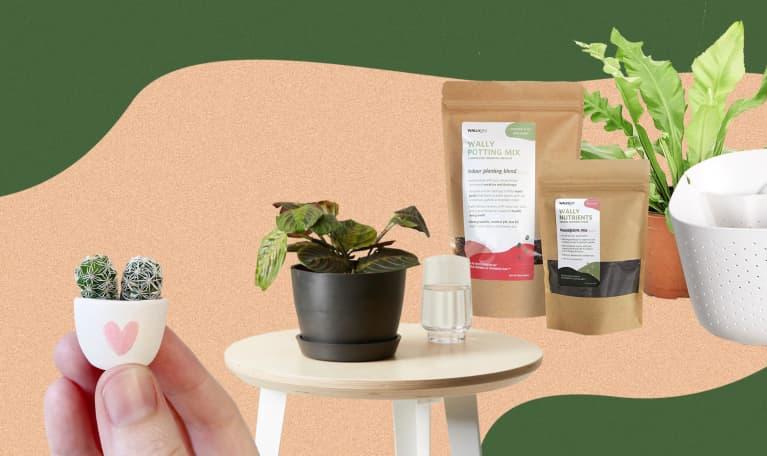 an arrangement of houseplants to gifta