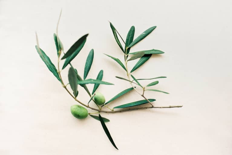 Olive Leaf Extract: Benefits, Side Effects & Anti