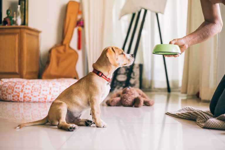 3 Easy Ways To Be A More Eco-Minded Pet Parent