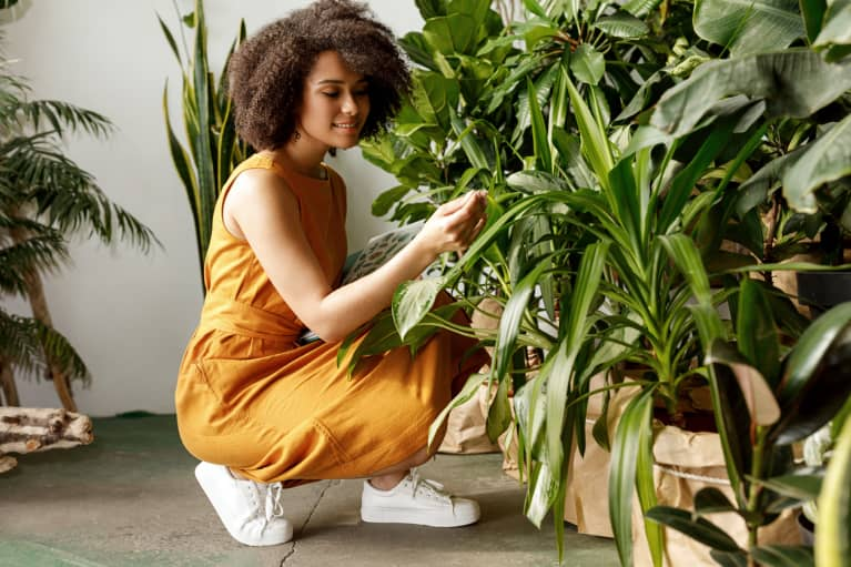 Why Some Plants Get Droopy In The Middle Of The Day & How To Know If It's Normal