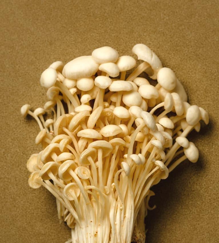 Enoki Mushroom