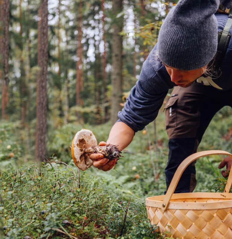 Why I Quit My Corporate Job To Become A Healing Mushroom Expert