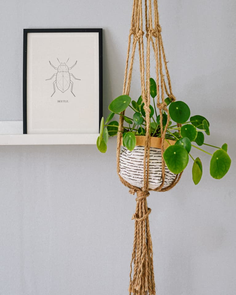 The Top Do's And Don'ts Of Hanging Plants At Home
