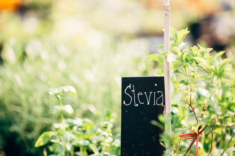 All You Need To Know About Stevia + How To Switch From Sugar