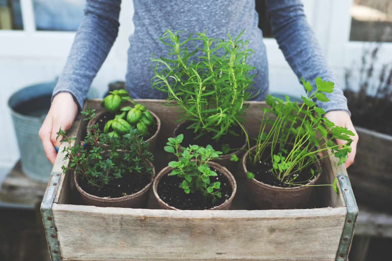 8 Home-Grown Plants & Herbs For Naturally Glowing Skin