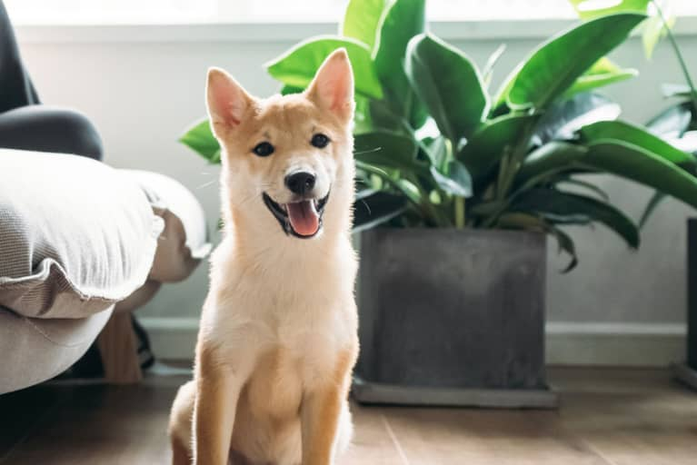 There Are 1,000s Of Plants Your Pet Won't Love As Much As You Do