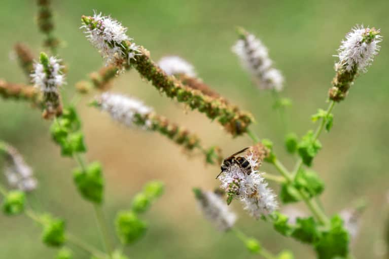 Black Cohosh: The Plant That Herbalists Call On For Treating Period Cramps, Sleep Issues & More