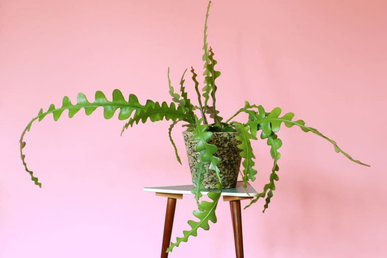 How To Make Sure Your Plants Don't Die When You're Away For The Holidays