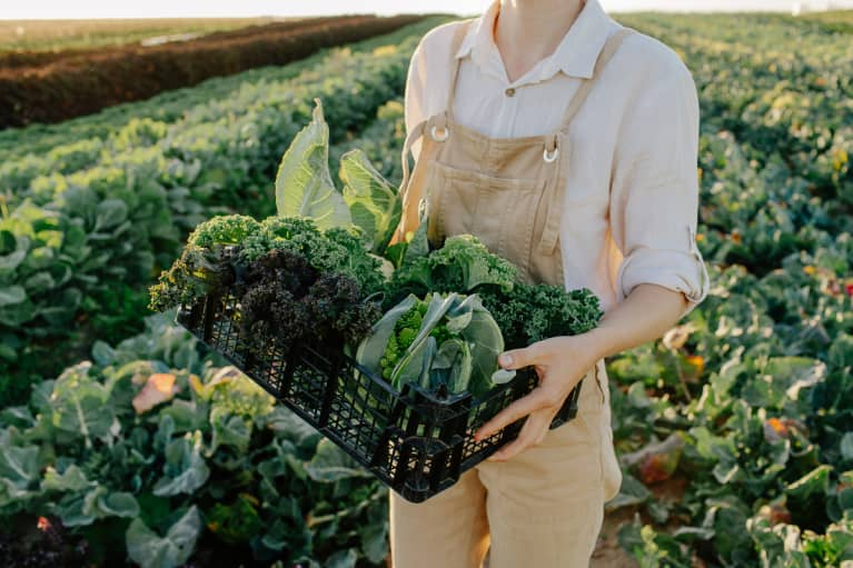 unrecognizable female farmer holding container with freshly harvested organic greens