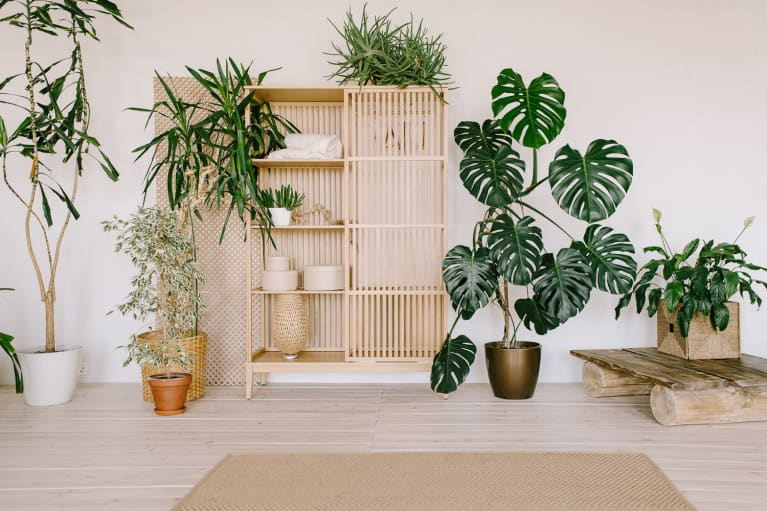 Minimalistic interior with a wooden shelf and houseplants