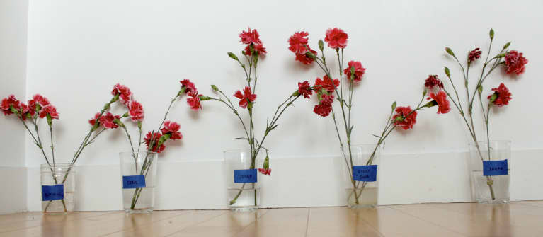 five flower bouquets in a row