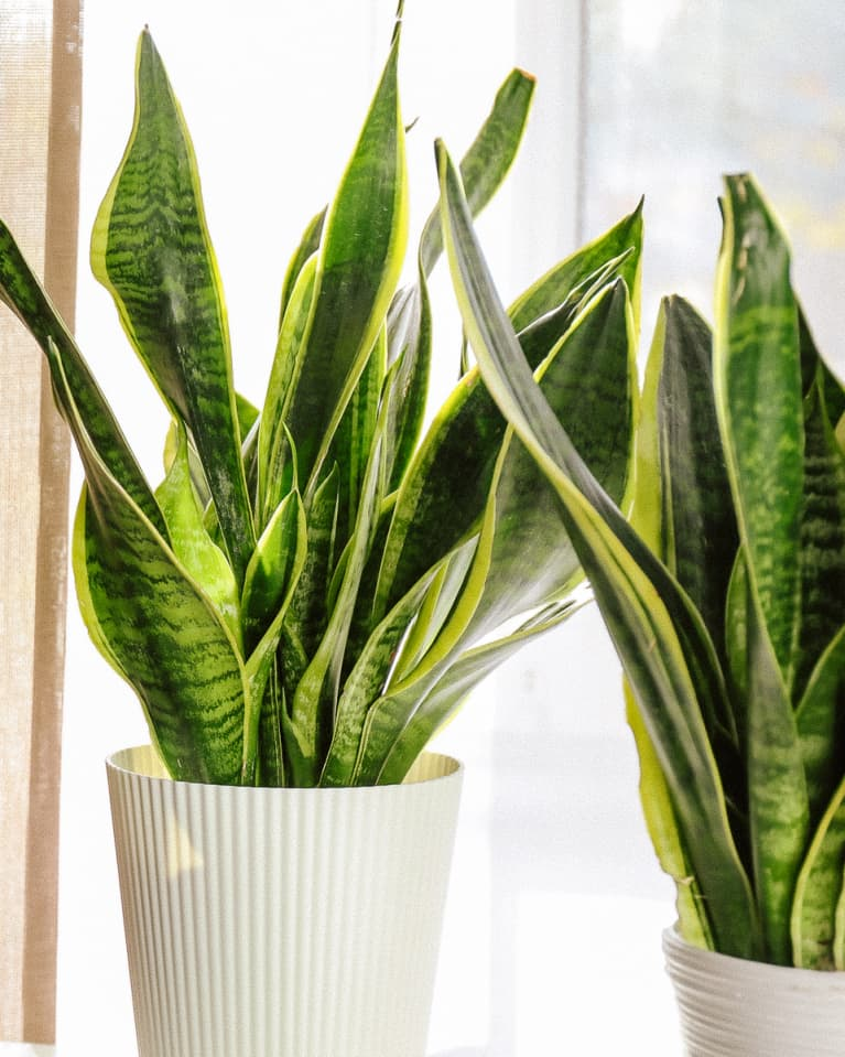 This Low Maintenance Plant Still Has Needs: Here's How To Keep It Happy