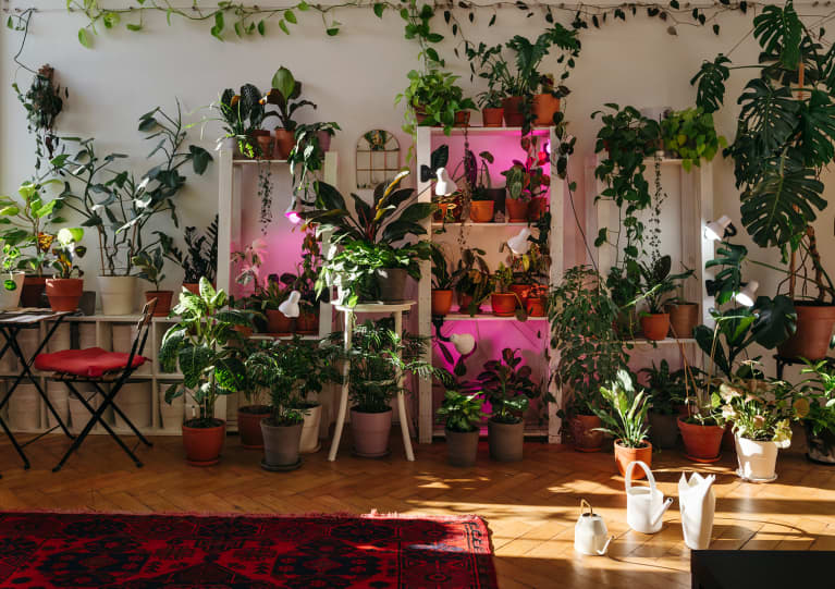 With This IKEA Hack, You Can Build An At-Home Green Wall In Minutes